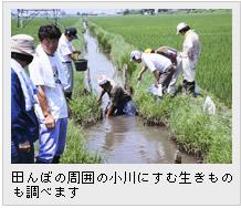 田んぼの周囲の小川にすむ生きものも調べます