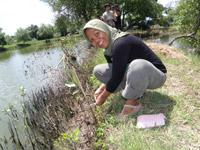 池にマングローブを植えるエコシュリンプの生産者