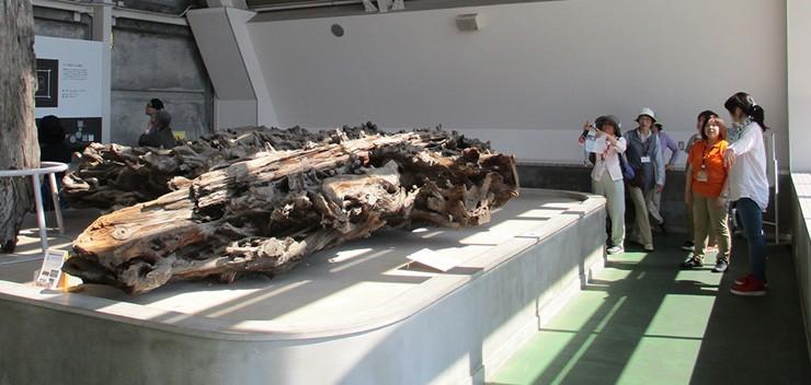 埋没林博物館で魚津の環境を学びなおしました。
