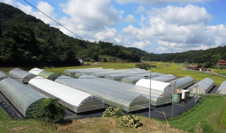 ていねいに整備された高橋さんの農場